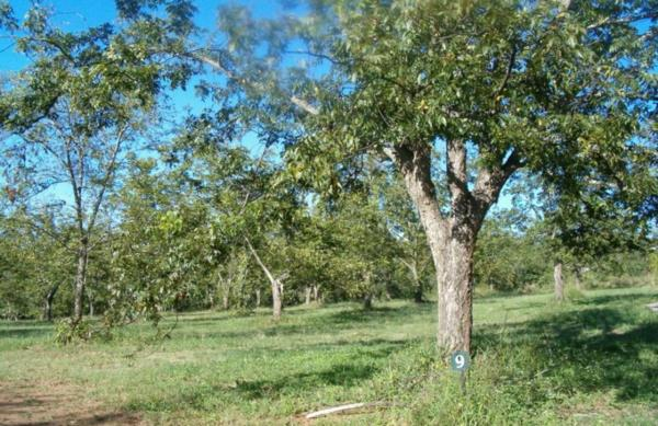 20000 m² vacant land for sale in White River