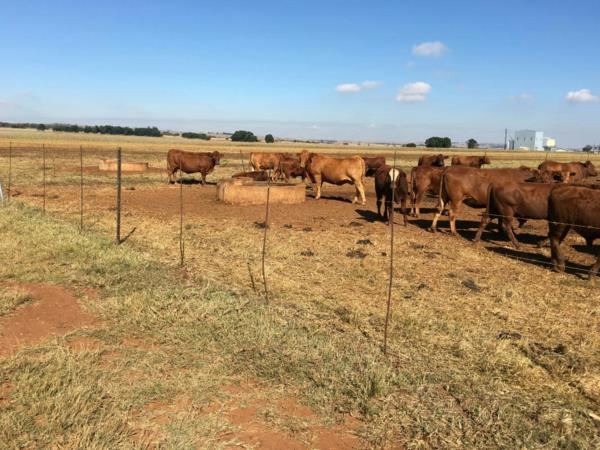 164 hectare mixed use farm for sale in Bronkhorstspruit