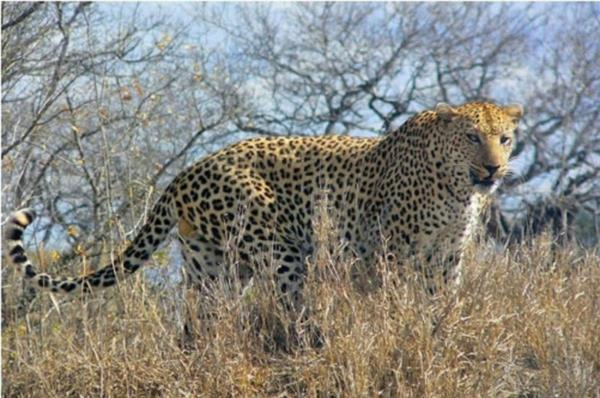 21250 hectare game farm for sale in Kalahari (Northern Cape)