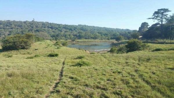 115.42 hectare game farm for sale in Jeffreys Bay
