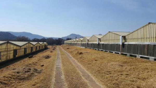 11.24 hectare crop farm for sale in Lanseria