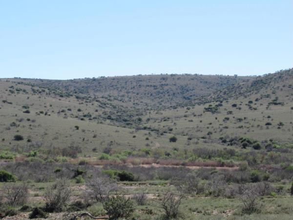 2763 hectare game farm for sale in Makhanda (Grahamstown)