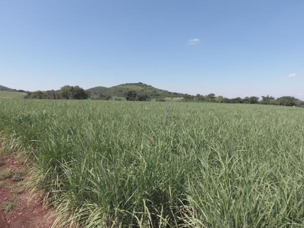 240 hectare crop farm for sale in Malelane