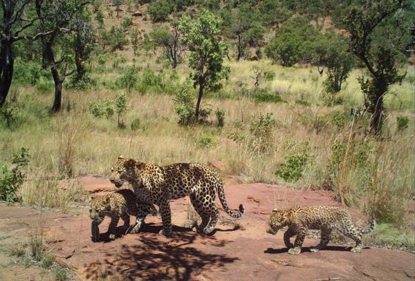 1600 hectare game farm for sale in Middelburg South, Mpumalanga