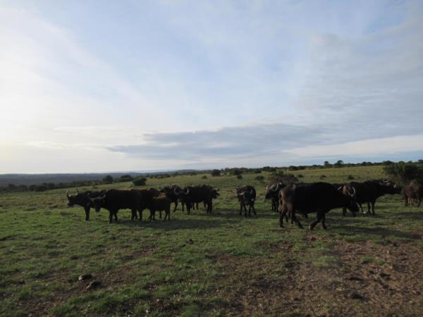 570 hectare game farm for sale in Bathurst