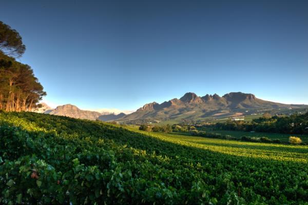 23.88 hectare wine farm for sale in Stellenbosch Farms