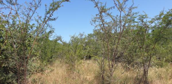 3202 m² vacant land for sale in Mjejane Game Reserve