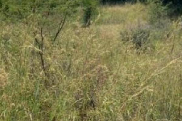 42826 m² vacant land for sale in Vaalbank (Middelburg)