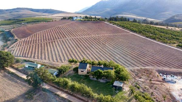 11 hectare fruit farm for sale in Villiersdorp