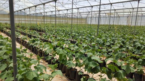 60 hectare crop farm for sale in Pretoria North (Pretoria)