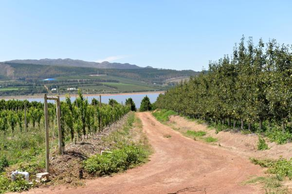 50 hectare fruit farm for sale in Villiersdorp