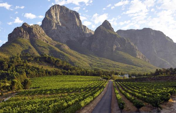 46 hectare wine farm for sale in Franschhoek