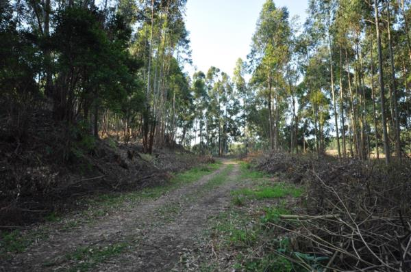 38663 m² vacant land for sale in Hilton (KwaZulu-Natal)