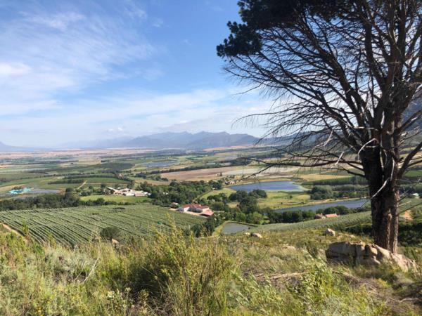 2384696 m² olive farm for sale in Tulbagh