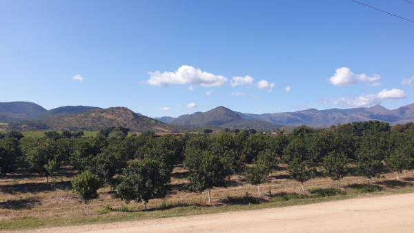 54 hectare nut farm for sale in Nelspruit